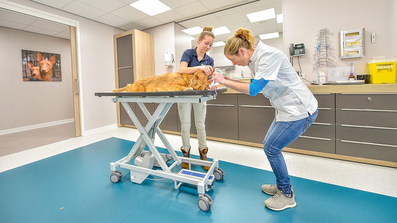 dierenkliniek-de-kempen